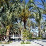 Elche, el palmeral de Alicante