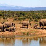 Esencias de Kenia: vacaciones en safari