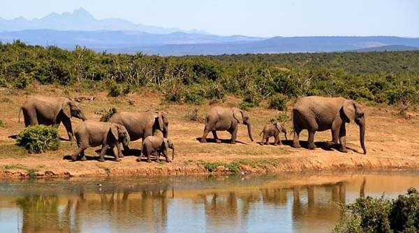 Elefantes - safari fotográfico
